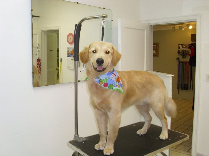 Best Dog Grooming in Asheville