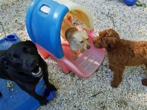 Best-Doggie-Day-Care-Asheville-NC