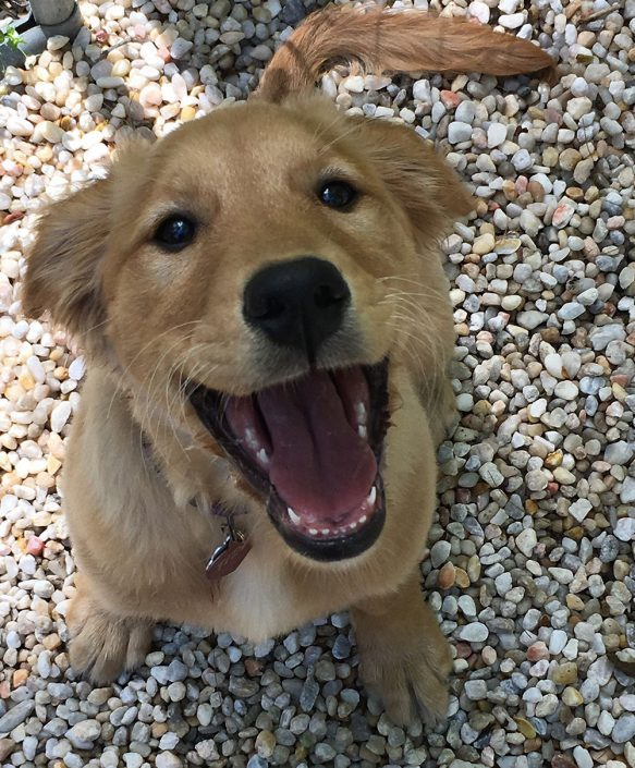 Happy Dog at Haw Creek Pet Care Dog Boarding