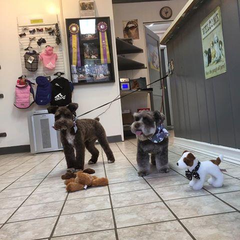 Asheville NC Dog Groomers