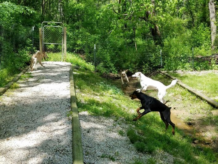 Doggie Day Care and Boarding with Outdoor area