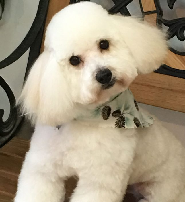 Doggie groomers in asheville