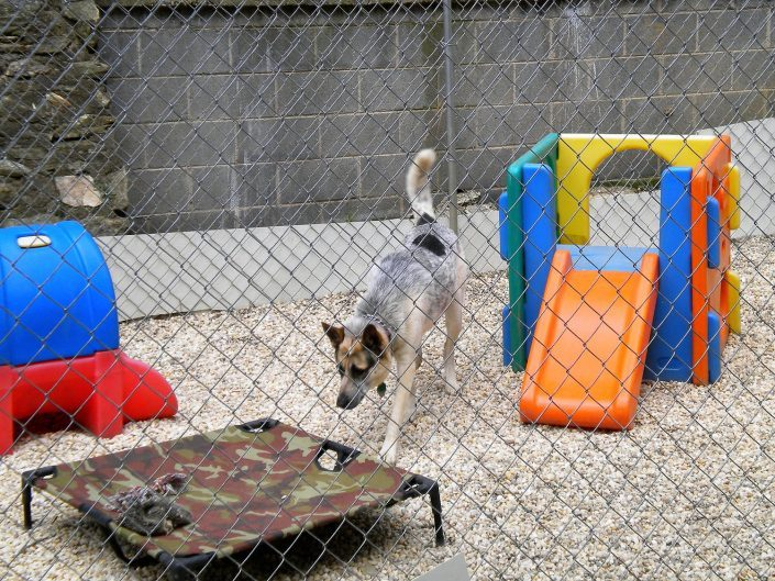 Penny in playyard at doggy dare care in Asheville NC
