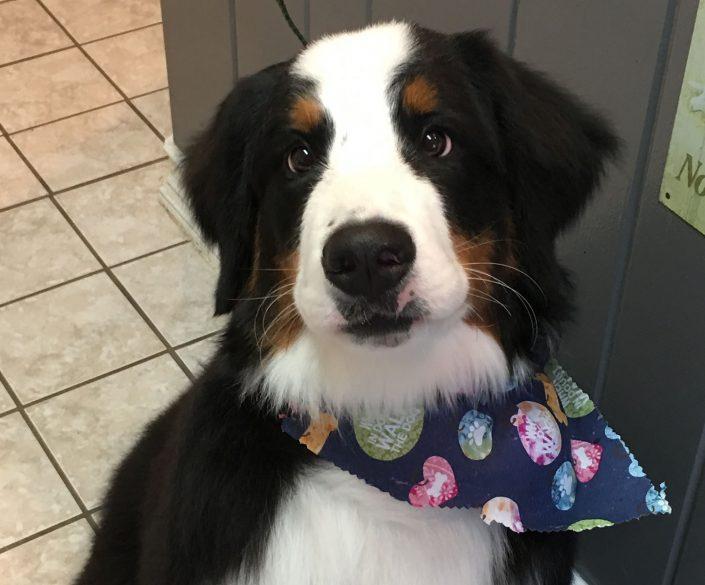 Groomming Dog at Haw Creek Pet Care