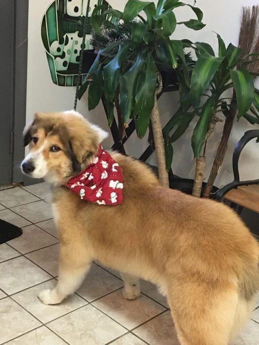 Scissor cut - Dog Grooming in Asheville NC